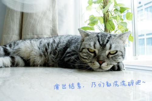 _DSC0224_副本.jpg